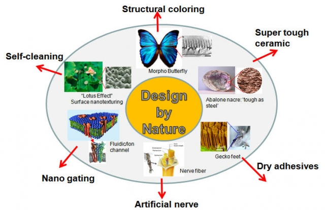 Bio-inspired materials and design
